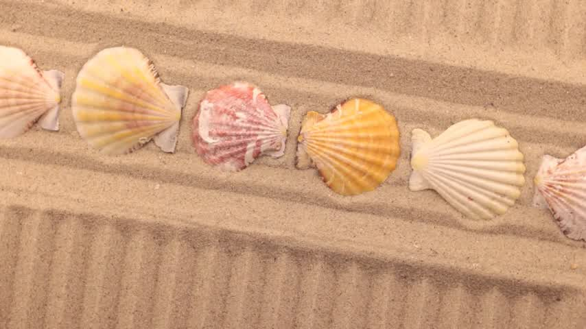 peixe : Beautiful lighting effects. Rotation sand in the form of a lines and seashell. View from above