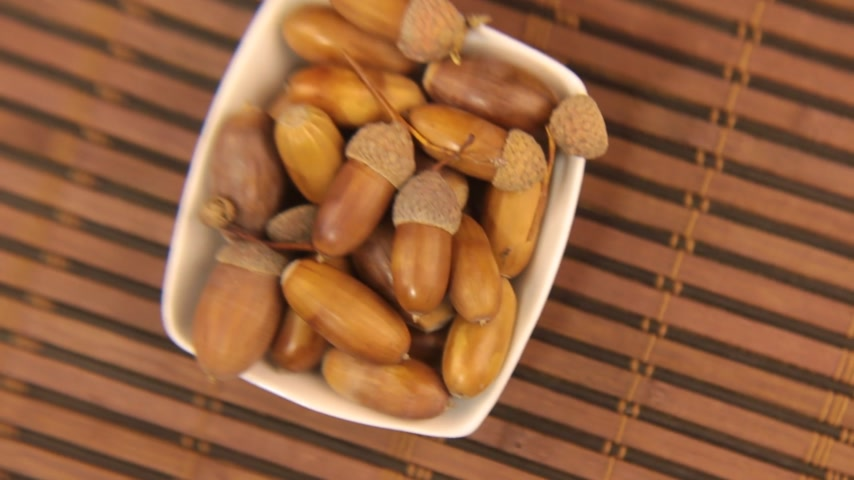 žalud : Close-up of the rotation of a dish with acorns through a magnifying glass. Dostupné videozáznamy