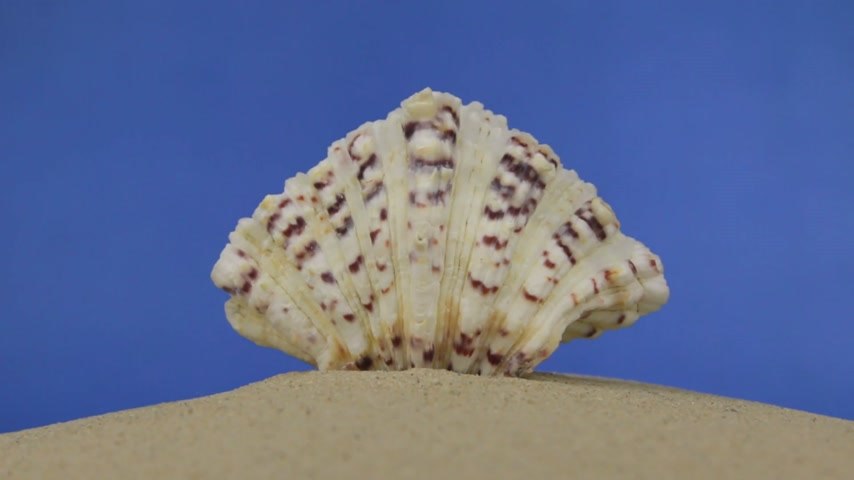 concha : Zoom of beautiful seashells lying on the sand. Isolated Vídeos