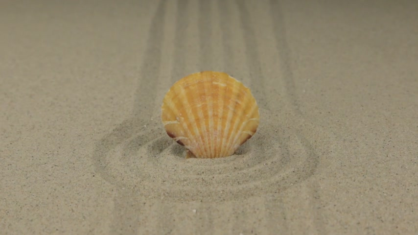 aproximação : Zoom of a beautiful seashell lying in a circle of sand. Vídeos