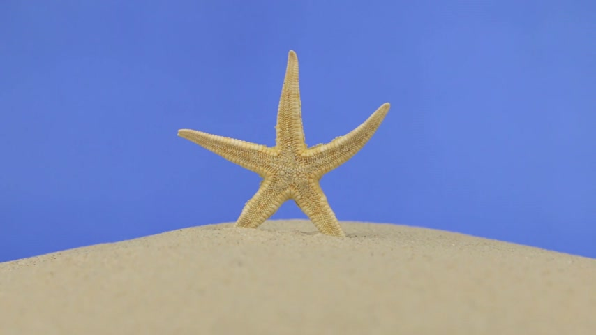 sicília : Zoom of beautiful starfish lying on the sand. Isolated