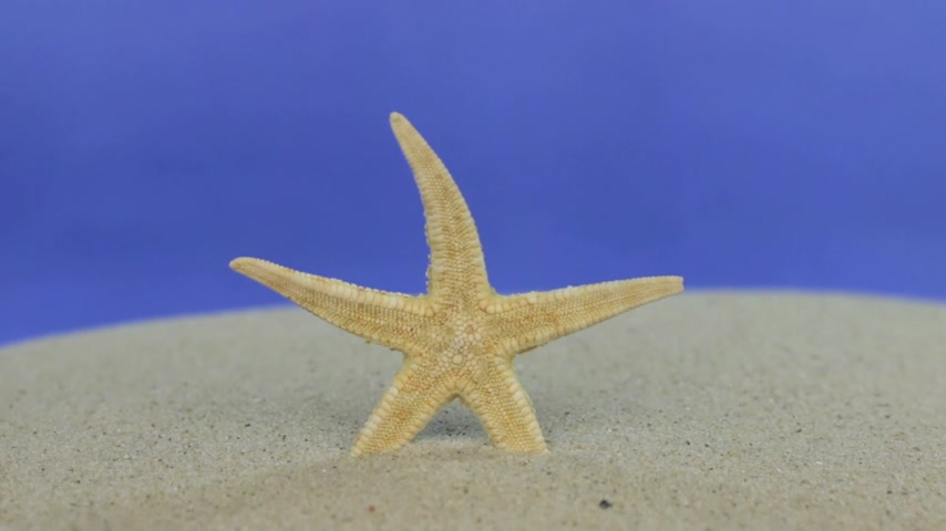 keying : Approaching the starfish standing in the sand. Isolated