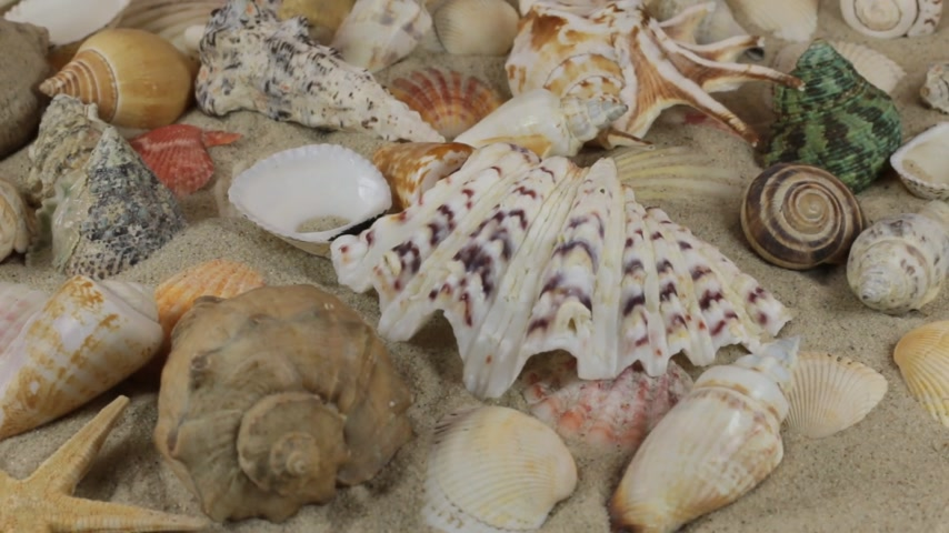 rozgwiazda : Rotation, close-up of background of seashells and stars lying on the sand.