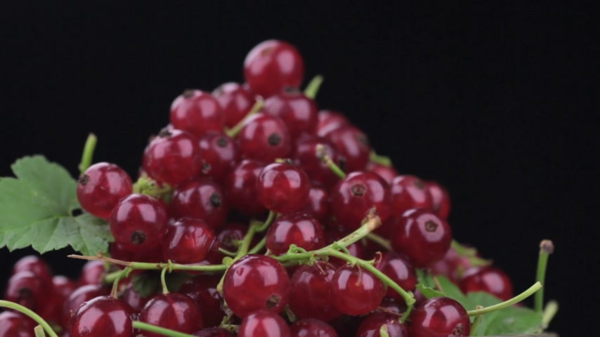 смородина : Close-up of rotation of a heap of ripe redcurrant.