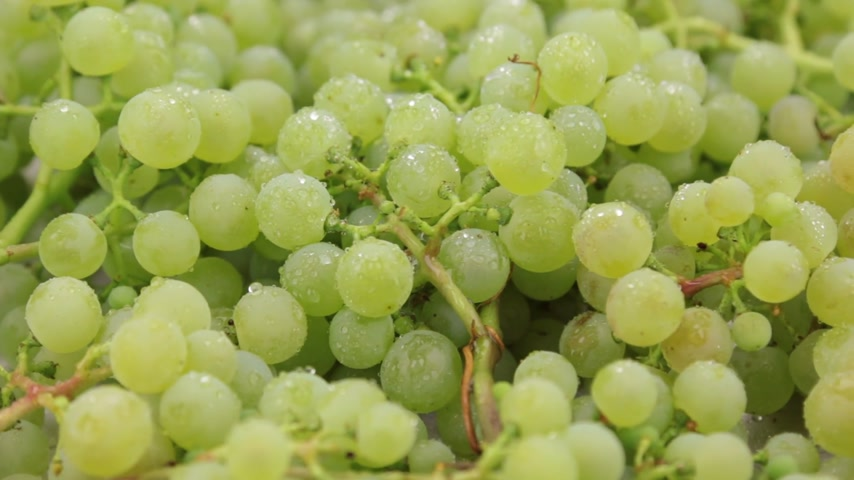 parreira : Close-up. Rotation of natural ripe green grapes in drops of dew. Food