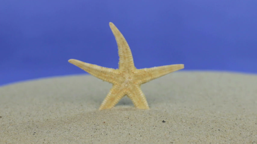 presente : Approaching the starfish standing in the sand. Isolated