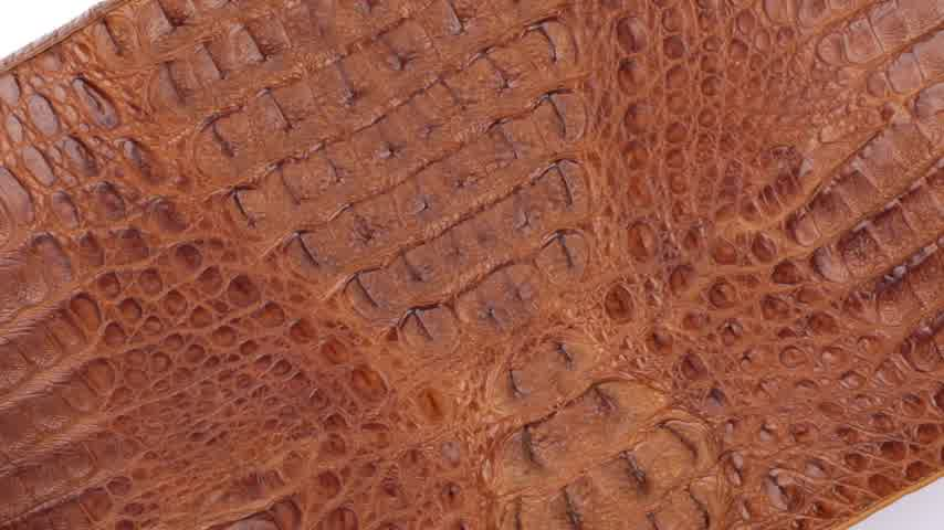 yırtıcı hayvan : Rotation, natural reptile skin, can be used as background, texture. Isolated. Stok Video