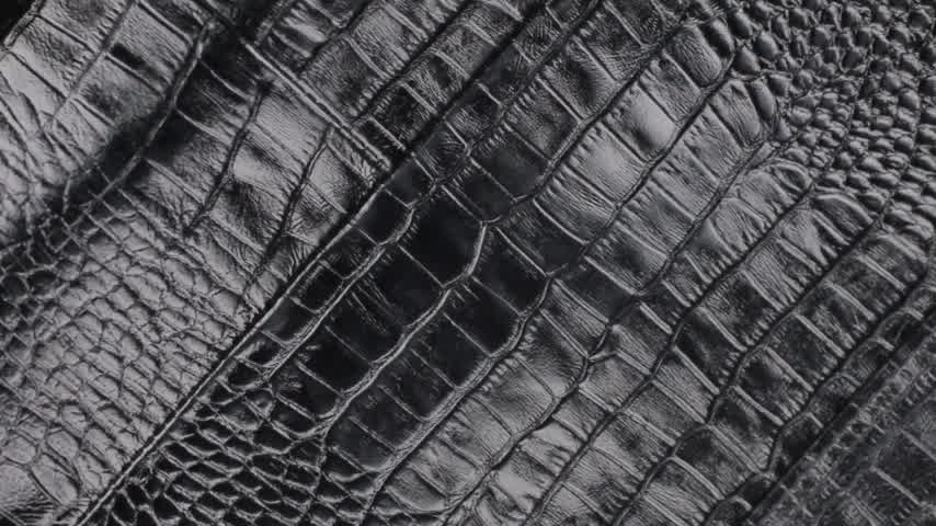 皮 : Rotation, close-up of the structure of natural crocodile skin.