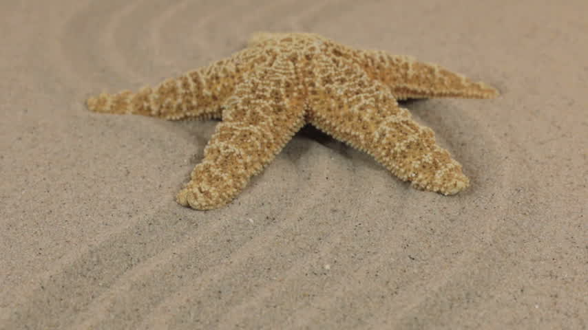 aproximação : Approximation of a beautiful yellow starfish lying on a zigzag made of sand. Vídeos