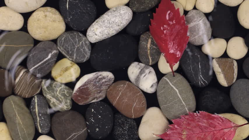 incidence : Falling droplet and autumn leaves in the water with sea stones . Stock Footage