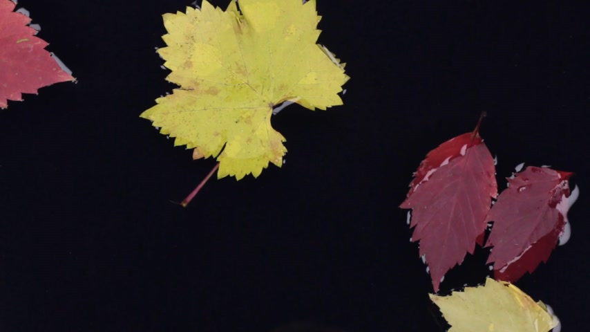 incidence : Falling autumn leaves in water. Stock Footage