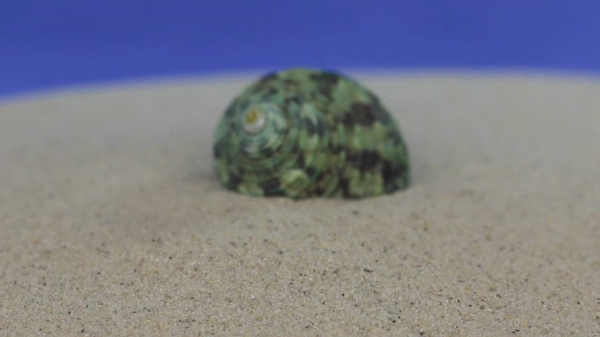 ulita : Approaching the sea shell lying on the sand. Isolated