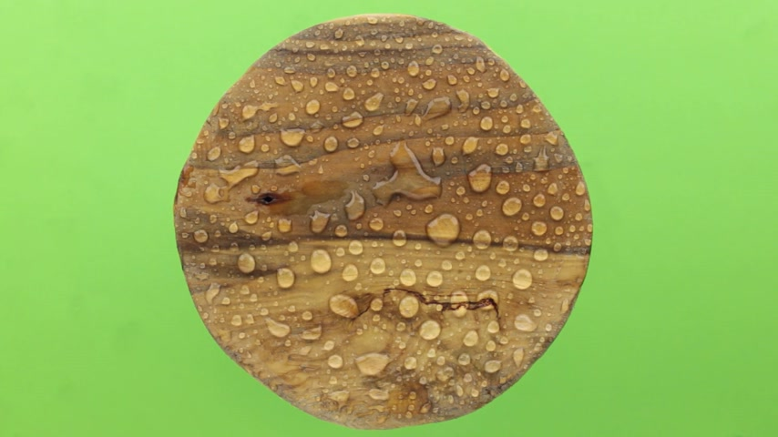 harmatcsepp : Wind blows on a round wooden board in drops of rainwater. Isolated