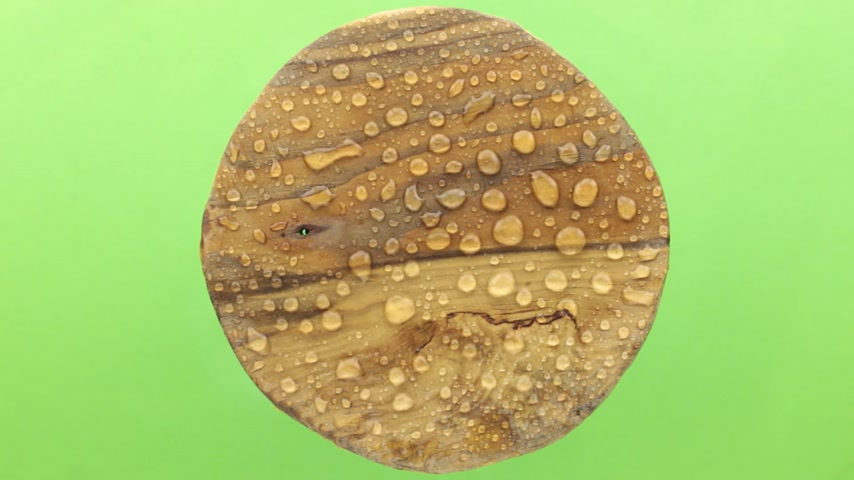harmatcsepp : Raindrops are blown away by a strong wind from a round wooden plank. Isolated