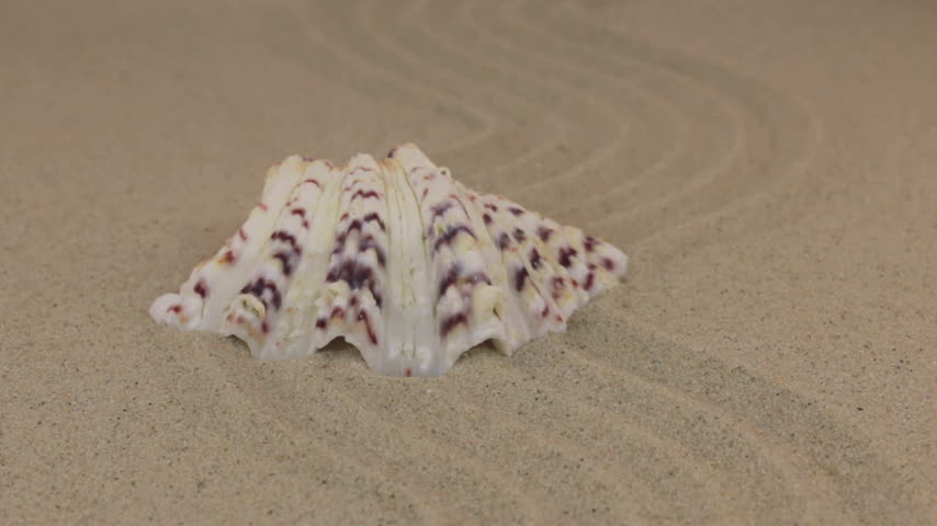 slider shot : Approaching a beautiful seashell lying on a wavy sand. Stock Footage