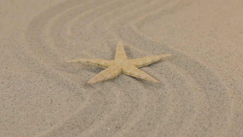 slider shot : Approximation of a beautiful yellow starfish lying on a zigzag made of sand. Stock Footage