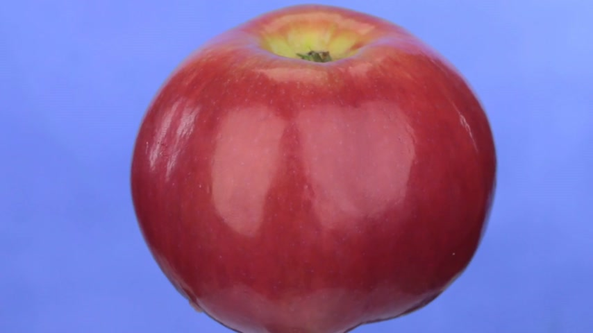isolamento : Rotation of a red ripe apple, isolated on blue.