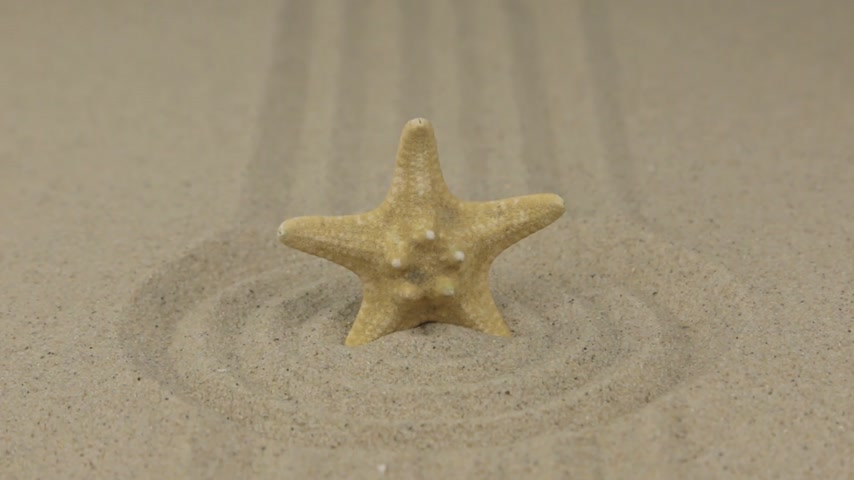 aproximação : Zoom. Starfish stands in the center of a circle made of sand.