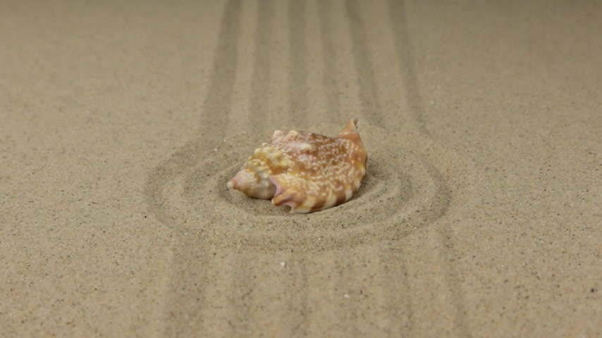 бежевый : Zoom, seashell lying on the center of a circle made of sand. Стоковые видеозаписи