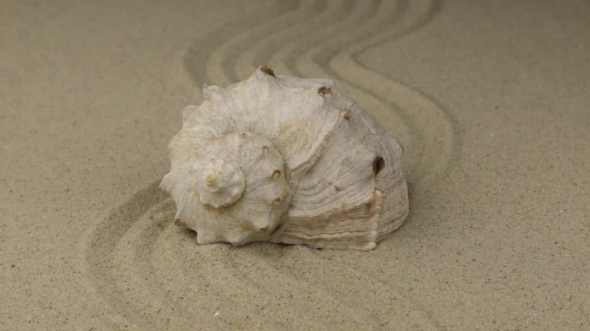 бежевый : Zoom, seashell lying on a zigzag made of sand.