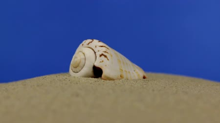 vacations cones : Zoom. Beautiful sea shells lying on the sand. Isolated Stock Footage