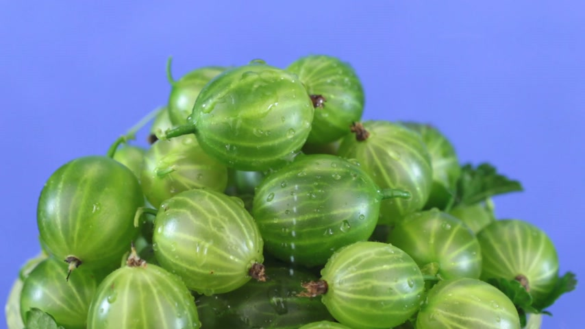 agrest : Raindrops fall on a rotating pile of green gooseberry.