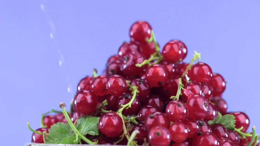 смородина : Raindrops fall on a rotating pile of ripe red currants. Стоковые видеозаписи