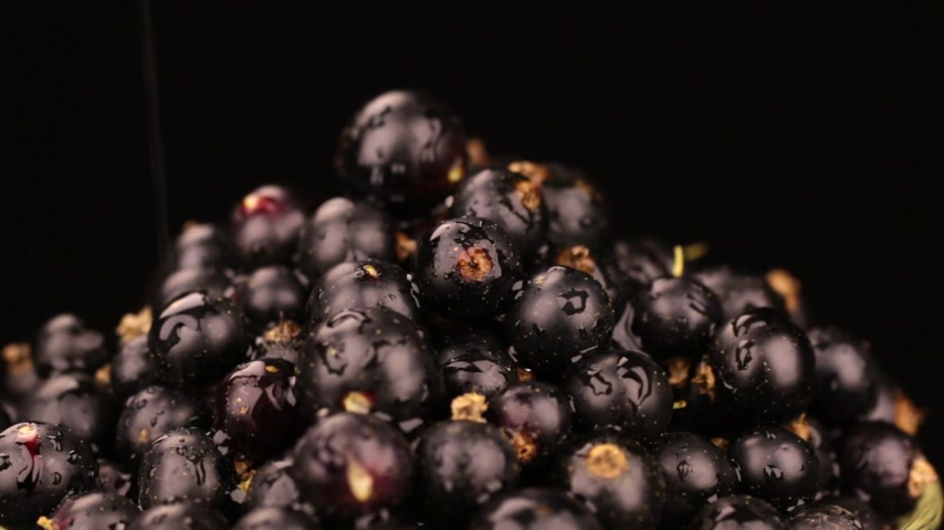 смородина : Raindrops fall on a rotating pile of ripe black currants. Isolated