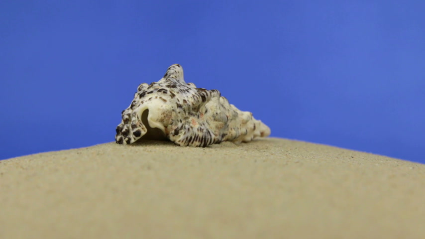 animal object : Approximation, zoom seashell lying on the sand, isolated Stock Footage
