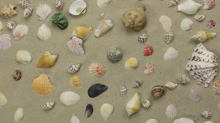 caracol : Summer background - seashells on beach sand. Crane shot.