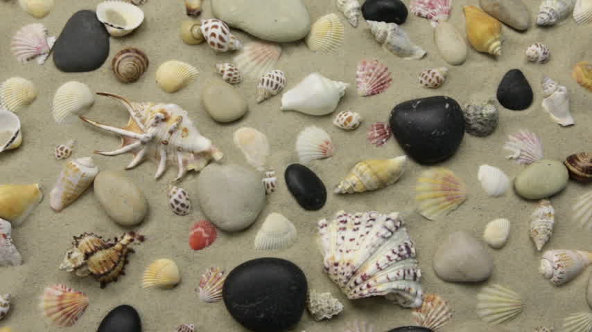 Summer background - seashells and stones on beach sand. Crane shot.