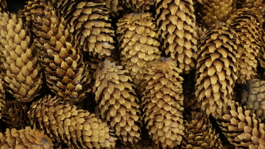 Close-up, texture of heap conifer cones. Rotation. Background of cones. Stok Video