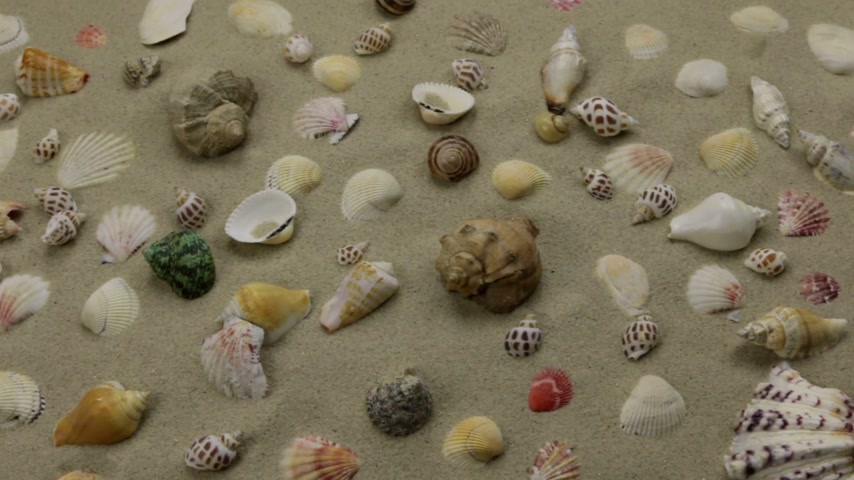 seashell : Seashells on sand. Panorama. Summer background Stock Footage