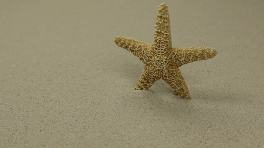 Starfish on sand. Slider shot. Sea summer vacation background