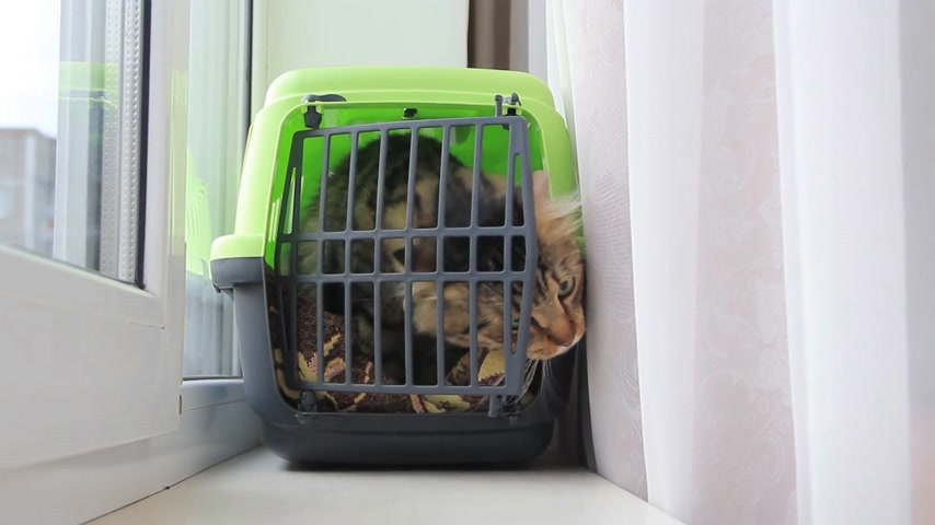 crate : cat climbs out of the box for cats