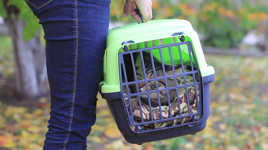 kennel : girl holding a cat carrier with a cat Stock Footage