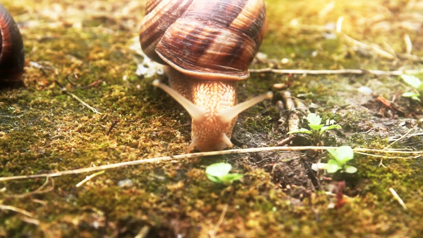 salyangoz : snail Stok Video