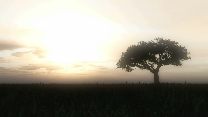 луг : tree sunset