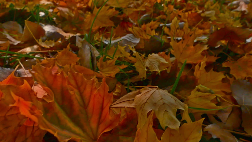 fall through : Moving through in autumn leaves