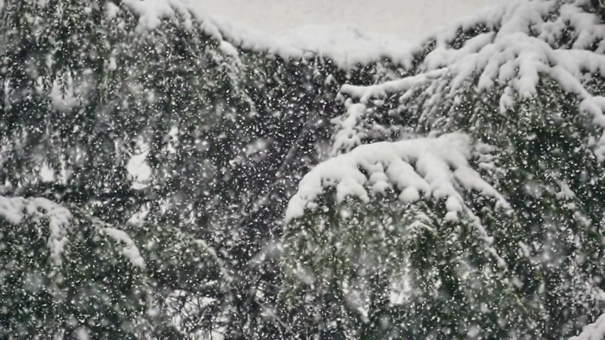 geada : snow falls on trees Stock Footage