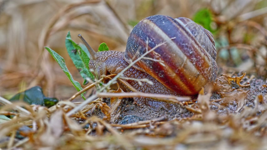 měkkýš : snail on the ground macro 4k Dostupné videozáznamy