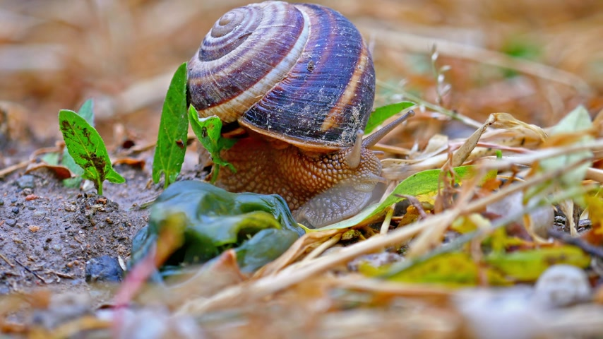 limace : snail on the ground macro 4k Vidéos Libres De Droits