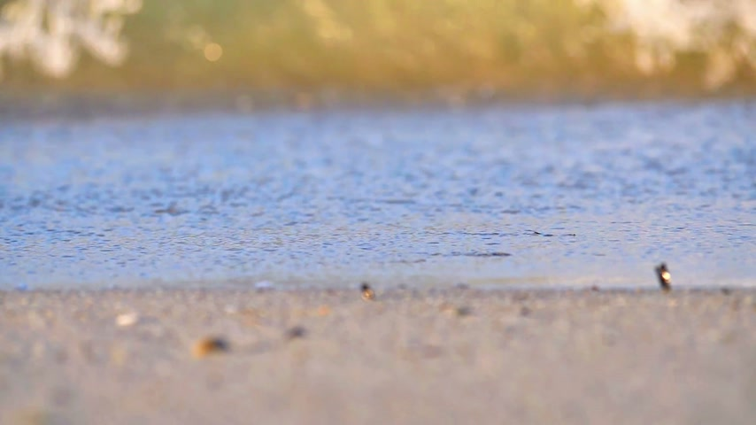 glitters : beach wave macro slow motion