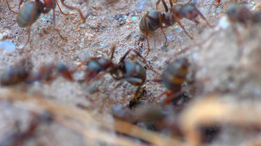 desert life : ants in a nest hole 60 fps to 30 fps 4k
