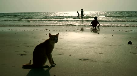 Arab children happily bathe the sea on a wild beach. The cat looks at them from the shore. UAE Wideo