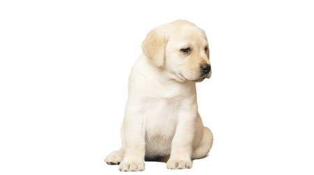 щенок : puppy on a white background
