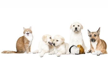 kotě : dog and cat and rodents on a white background