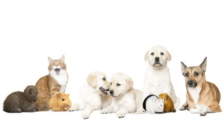 evcil hayvanlar : funny pets on a white background
