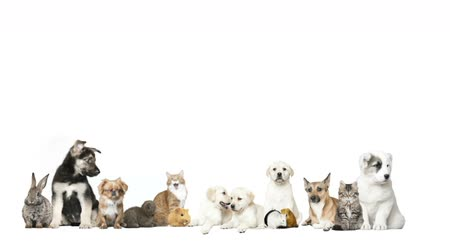 domestic animals : animals on a white background