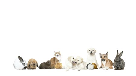 de raça pura : pets on a white background